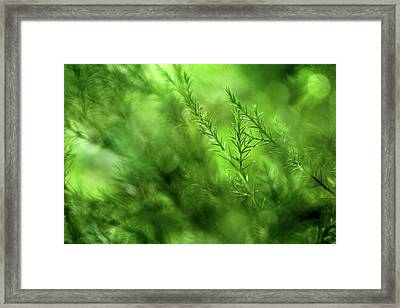 Finding My Way Framed Print by Mike Eingle