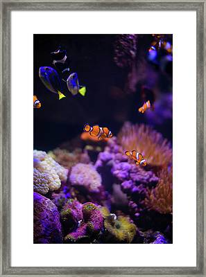 Finding Nemo And Dory 2 Framed Print