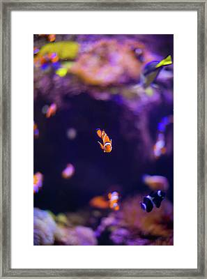 Finding Nemo And Dory 3 Framed Print