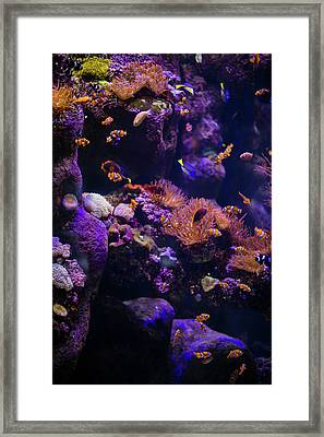 Finding Nemo And Dory 5 Framed Print