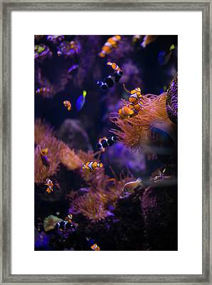 Finding Nemo And Dory Framed Print