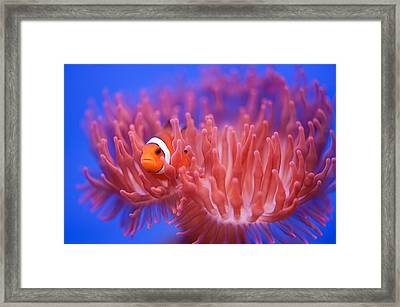 Finding Nemo Framed Print by Wendy