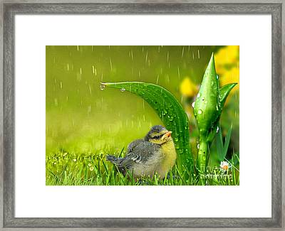 Finding Shelter Framed Print