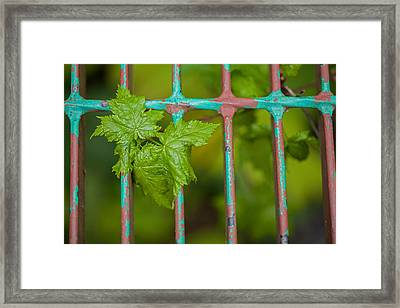 Framed Print featuring the photograph Finding The Light by Fran Riley