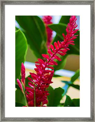 Finding The Light Floral Framed Print