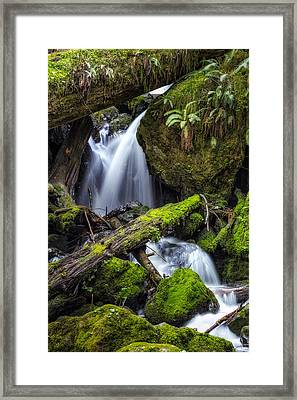 Finds A Way Framed Print