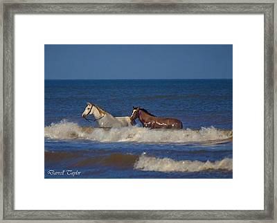 Fine Art America Pic 117 Horses At Surfside Framed Print by Darrell Taylor