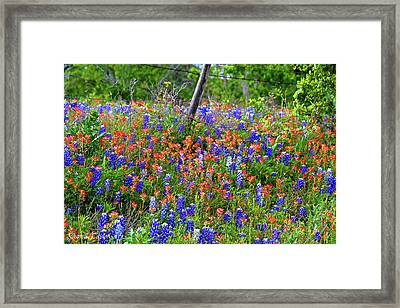 Fine Art America Pic 160 Colored Fence Framed Print by Darrell Taylor