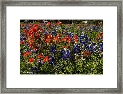 Fine Art America Pic 161 Closeup Of Wildflowers Framed Print by Darrell Taylor