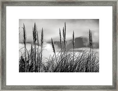 Fine Art Black And White-188 Framed Print