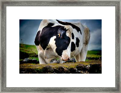 Fine Art Colour-136 Framed Print