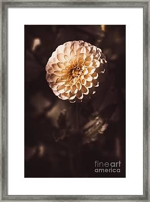 Fine Art Floral Photo. Orange Dahlia Flower Framed Print by Jorgo Photography - Wall Art Gallery