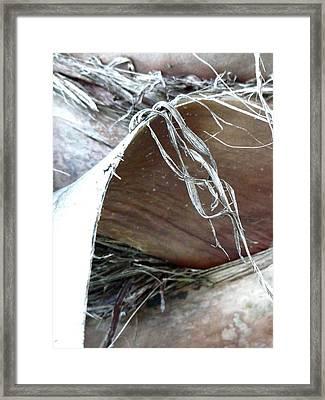 Fine Balance Framed Print by Donna McLarty