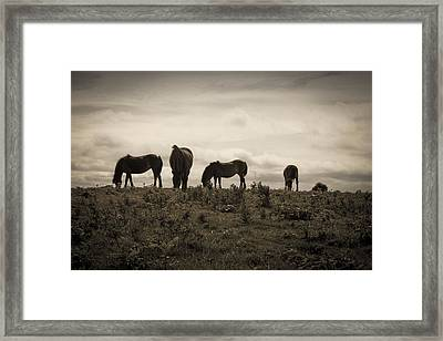 Framed Print featuring the photograph Fine Dining by Stewart Scott