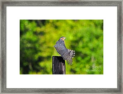 Framed Print featuring the photograph Fine Feathers by Al Powell Photography USA