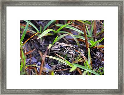 Framed Print featuring the photograph Fine Frog by Al Powell Photography USA