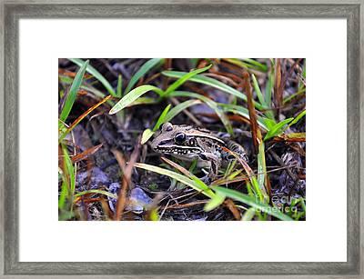 Fine Frog Framed Print