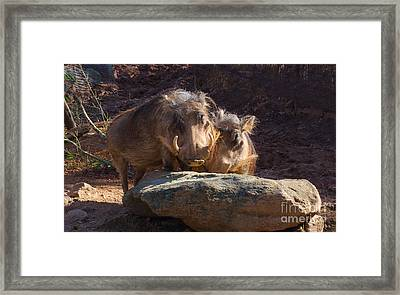 Fine Looking Couple Framed Print by Donna Brown