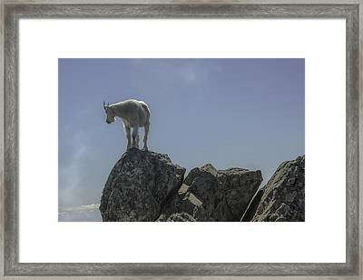 Fine View Framed Print