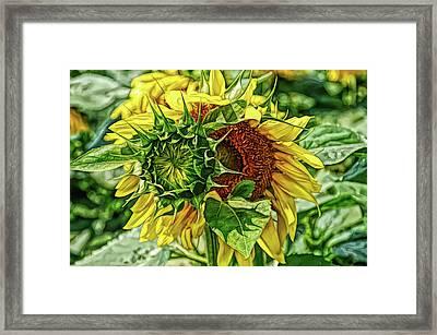 Fine Wine Cafe Joyous Sunflower Framed Print