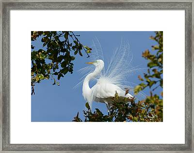 Framed Print featuring the photograph Finery by Fraida Gutovich