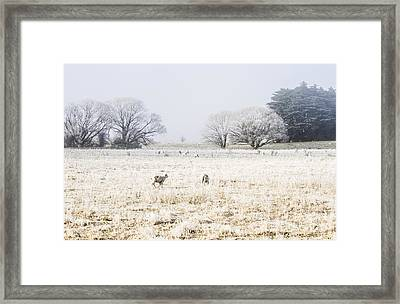 Fingal Winter Farmyard Framed Print