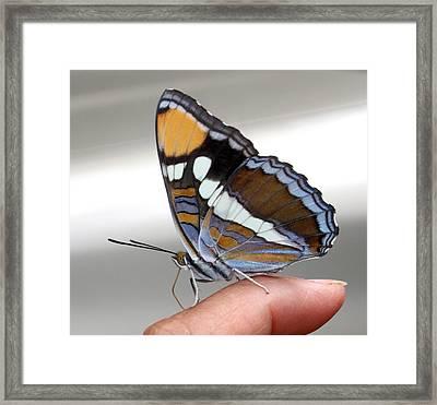 Finger Blessing Framed Print by Marie Neder