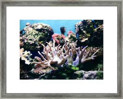 Finger Coral Framed Print by Steve  Heit