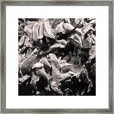 Framed Print featuring the photograph Fingers Of Time - Giant Oyster Shell Fossils by Menega Sabidussi