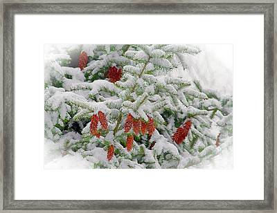 Framed Print featuring the photograph Fir Cones On White Photo Art by Sharon Talson