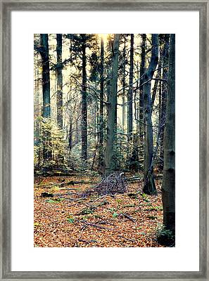 Fir Forest-2 Framed Print by Henryk Gorecki