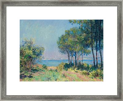 Fir Trees At Varengeville Framed Print by Claude Monet