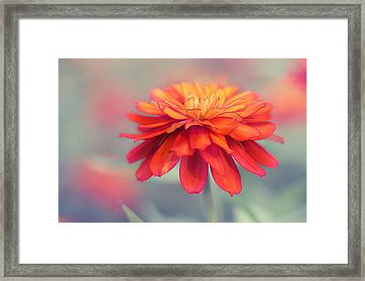 Fire And Ice Framed Print by Amy Tyler