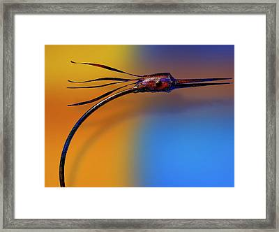 Fire Bird Framed Print by Paul Wear