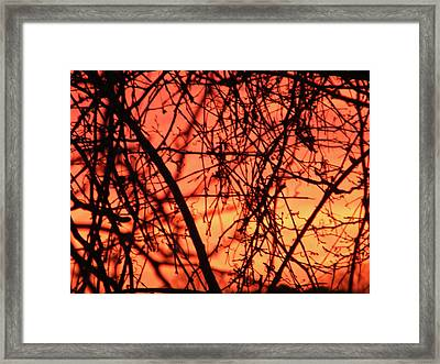 Fire Framed Print by Cassandra Donnelly
