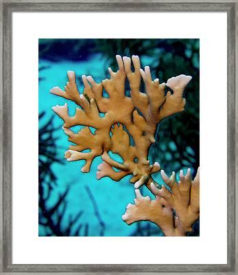Fire Coral Portrait Framed Print by Jean Noren