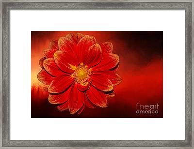 Fire Dahlia By Kaye Menner Framed Print by Kaye Menner