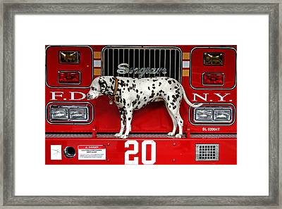 Fire Dog Framed Print by Bryan Hochman