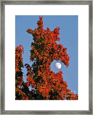 Fire Dragon Tree Eats Moon Framed Print by CML Brown