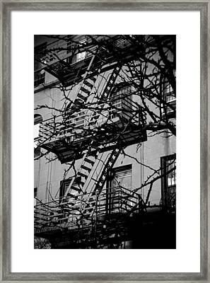 Fire Escape Tree Framed Print by Darren Martin