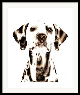 Dog Breed Drawings Framed Prints
