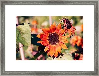 Fire Flower Framed Print by Jonathan Michael Bowman