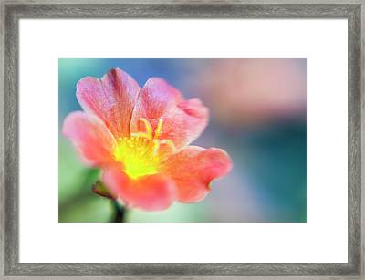 Framed Print featuring the photograph Fire From Within by Christi Kraft