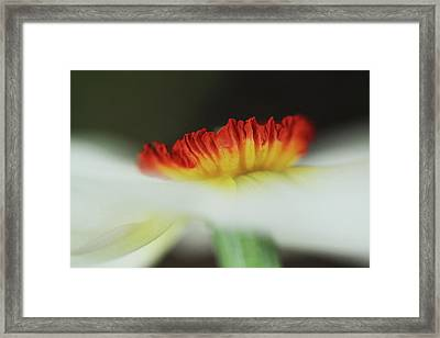 Fire In The Mist  Framed Print by Connie Handscomb