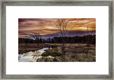 Fire In The Pine Lands Sky Framed Print