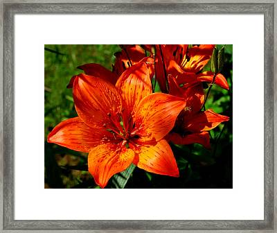 Framed Print featuring the photograph Fire Lilies by Marilynne Bull