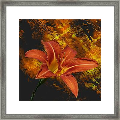 Framed Print featuring the photograph Fire Lilly by Rick Friedle