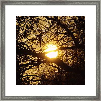Fire Nest Framed Print