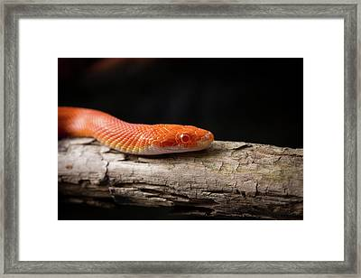 Fire On A Tree Framed Print by Svetlana Svetlanistaya