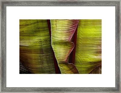 Fire Palm Iv Framed Print